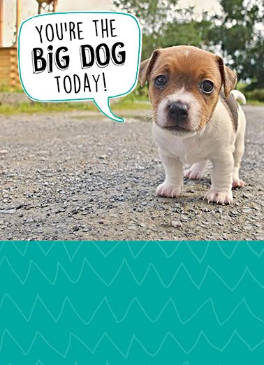 Funny Birthday Card Big Dog From Cardfool