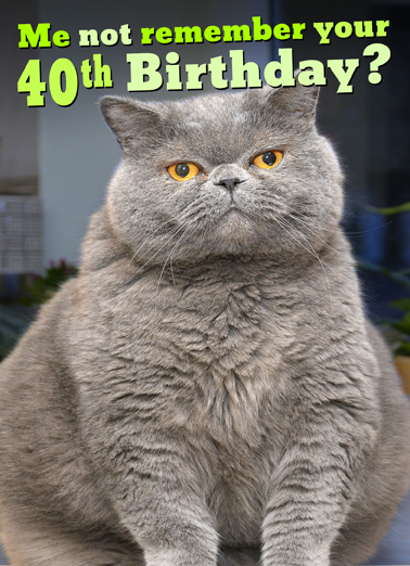 Funny Birthday Ecard